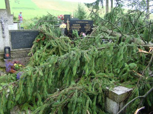 Spadnuté stromy na cintoríne